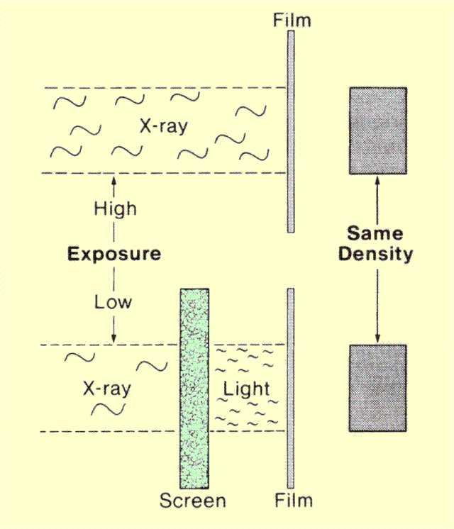 Radiographic Receptors