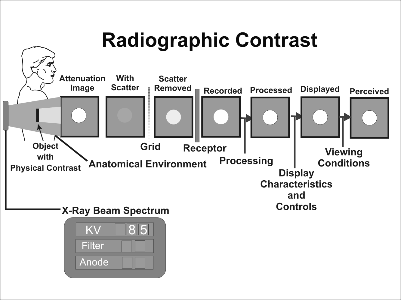 X-Ray Image Formation and Contrast